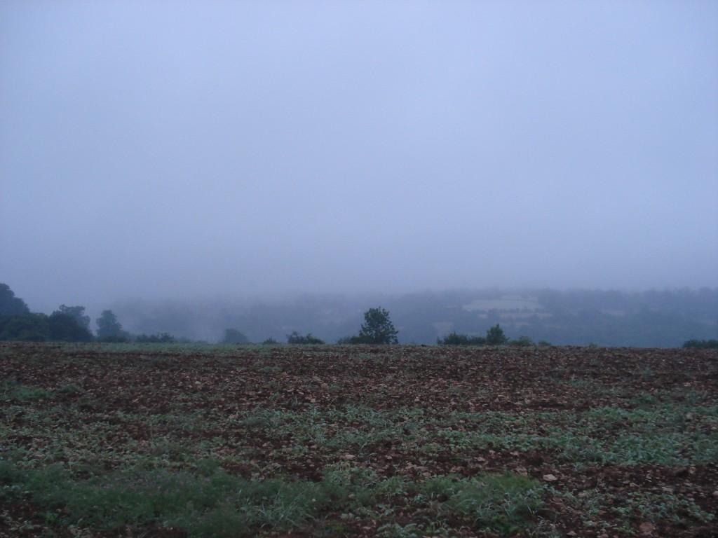 The farm 165