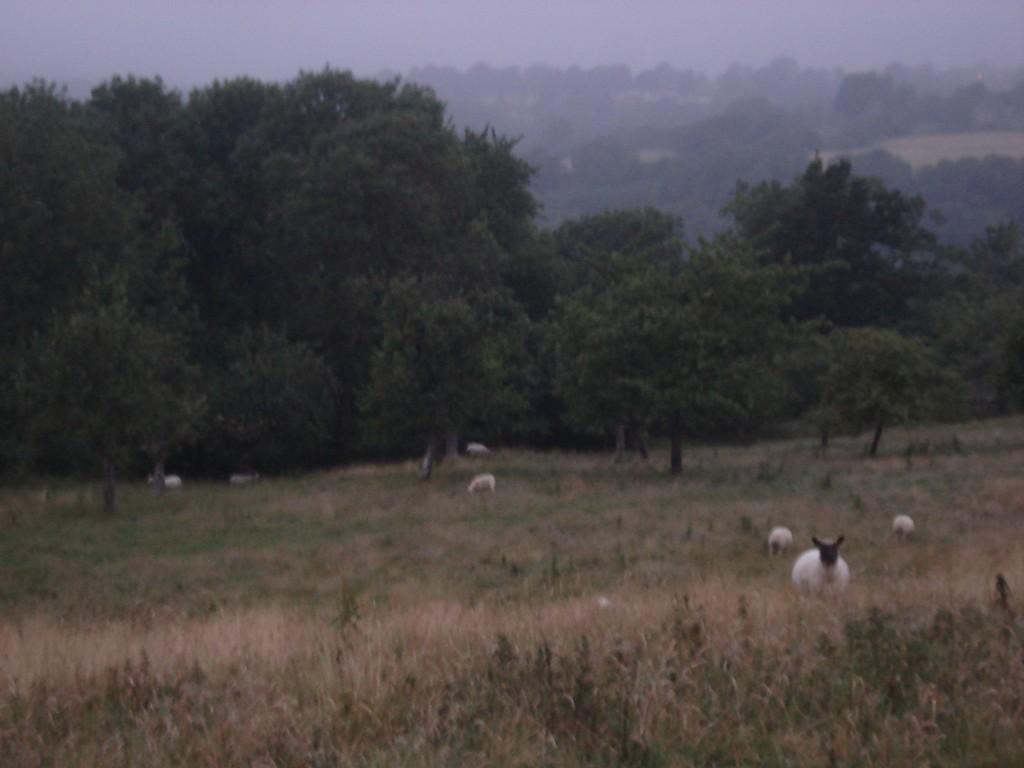 The farm 166