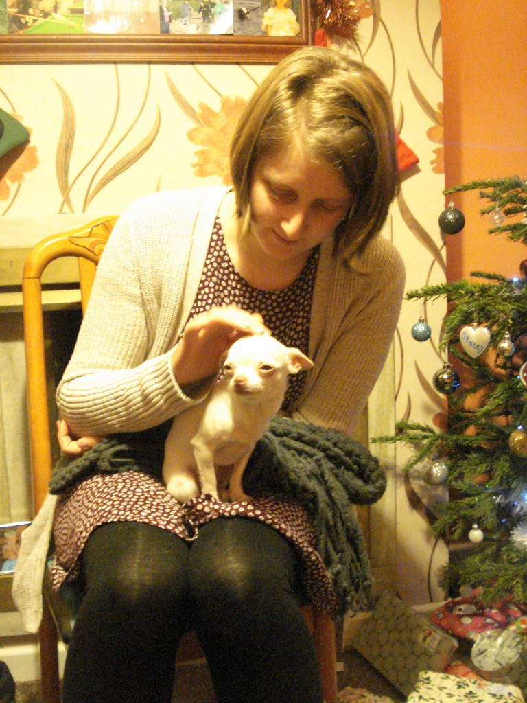 christmas cats and dogs 015