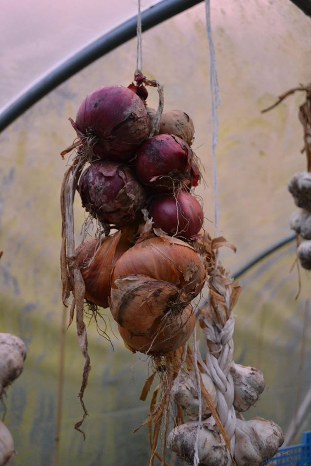 string of onions