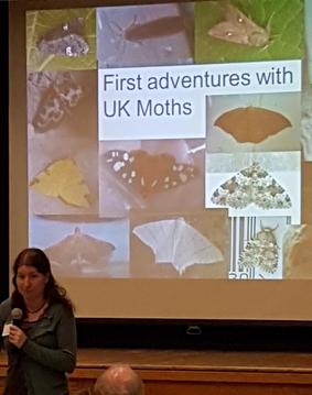 presenting Moths