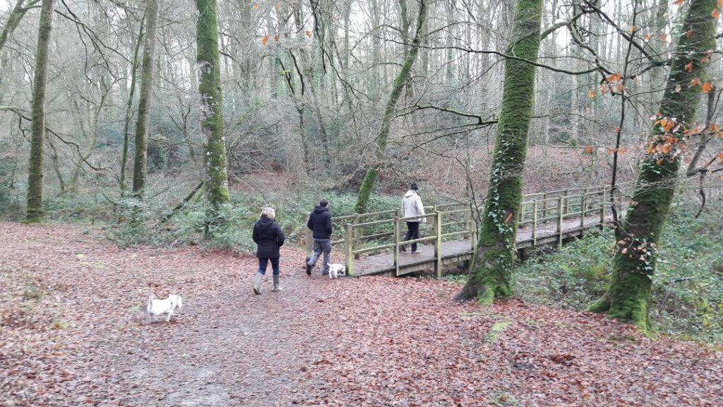 crossing bridge in woods